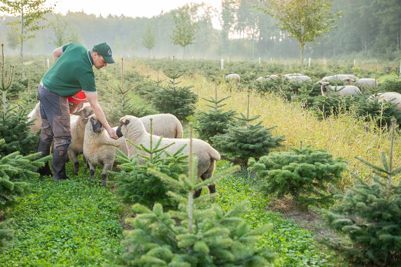 Perfekte Kombi: Bio-Weihnachtsbäume aus Bayern!